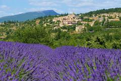 P1150006 (alainazer) Tags: aurel vaucluse provence france fiori fleurs flowers fields champs colori colors couleurs ciel cielo sky lavande lavanda lavender village