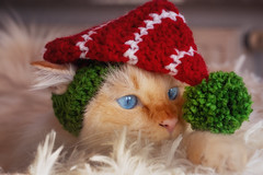 What ... is ... this ?!! (FocusPocus Photography) Tags: tofu dragon mütze hat elf weihnachten christmas tier animal