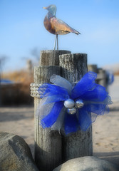 Season's Greetings from Grand Bend! (Anthony Mark Images) Tags: grandbend ontario canada sand beach rocks woodenposts rope christmasdecorations blueribbon silverbulbs seasonsgreetings gull seagull art nikon d850 flickrclickx christmas festive