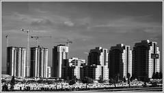 Haifa SW_DSC8926 (robert.pechmann) Tags: haifa israel sw friedhof hochhäuser bw friedenslichtreise