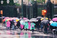 IMGP8685 (maurizio siani) Tags: napoli naples italia italy pentax k70 colore colors strada mattina giorno gente ombrelli ombrello pioggia rain colori street photography semaforo folla via cancello novembre 2019 inverno autunno bagnato bagnarsi