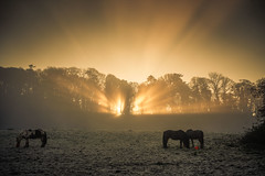 Stop the car moment (jasonhudson2) Tags: horses light trees mist clouds spectacular crepuscular heavenly sony