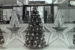 Christmas 2019 (rieblinga) Tags: berlin lio lichterfelde ost weihnachtsbaum stern beleuchtung 1122019 analog revue ac4p1 agfa apx 400 rodinal adox 150 sw