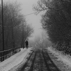 Winter road (fargo_1980) Tags: winter mood atmosphere beauty wonder magic land landscape ice cold freeze frozen white night evening hill mountain lights tree forest wind flag hungary magyarország budapest top december dark scaninavian scandic north