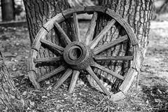 As Time Goes By... (_aires_) Tags: aires iris wheel wagonwheel texture bark leaves fallenleaves dryleaves mclean texas unitedstatesofamerica canoneos5dmarkiv canonef85mmf18usm sandspurlaketexas segmentedwheel