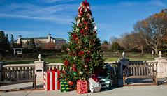 Christmas is here! (Millie Cruz (On and Off)) Tags: christmas autumn decoration gifts garden hersheygardens hersheypa balconies sunny sky blue canoneos5dmarkiii ef24105mmf4lisusm milliecruz festive holidays bench 🎄 gift bows ornaments pine tree