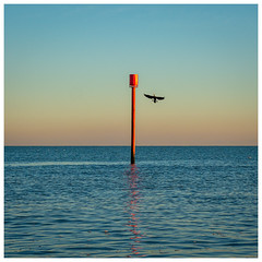 Bird Almost on Stick (Mandy Willard) Tags: 365 0212 marker cormorant sea horizon sunset