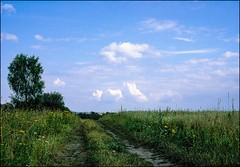 DRA090215_030 (dmitryzhkov) Tags: moscow russia ukraine color colour film analog life wildlife documentary road track nature dmitryryzhkov country rural outdoor countryselect selection biosphere