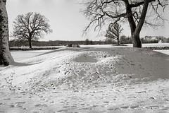 In the park with my Beltica (Geir Bakken) Tags: beltica vintagecamera film filmisnotdead filmphotography filmcamera filmisalive filminotdead 135 135film blackandwhite bw analog analogphotography norway borreparken landscape snow winter fomadonp fomapan200 perfectbeauty