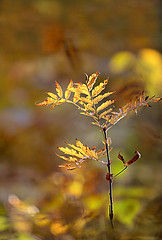 Sunny day in the forest (ElaR.) Tags: nature naturecomposition naturecolours naturebeauty plant plants autumn autumncolours autumnleaves autumnweather forest forestplants autumnforest goldenautumn goldenleaves twig nikon outside