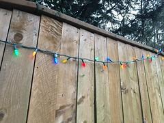 336/365: Festive Fence