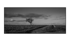 lonely Tree II (ASTPic) Tags: noiretblanc bw tree baum lonelytree branches hug