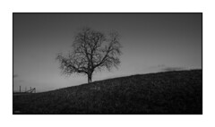 lonely Tree (ASTPic) Tags: tree noiretblanc bw hug dancing branches lonelytree baum