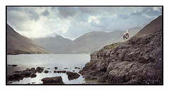 G_Wastwater_Portra160_05 (D_M_J) Tags: wast water wastwater lake district lakedistrict lakeland cumbria landscape sheep film camera large format medium 6x12 roll 120 horseman back ebony sw45 150mm sinar sinaron kodak portra 160 tetenal colortec c41 epson v850 vuescan colourperfect colorperfect colour morning