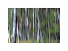 Waldgeist (E. Pardo) Tags: waldgeist bosque wald forest árboles trees bäume formas formen forms autumn otoño herbst steiermark austria