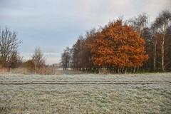 Broekpolder Vlaardingen (Hugo Sluimer) Tags: broekpolder broekpoldervlaardingen vlaardingen nederland zuidholland holland natuur nature natuurfotografie natuurfotograaf naturephotography vorst rijp nikon nikond500 d500