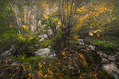 Lost in the Fall Forest (samal photography) Tags: highway america beautiful forest autumn beauty longexposure landscape photography colors wilderness amazon amazing jungle fall waterfall nature