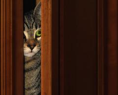 Curiosity (robertoburchi1949) Tags: animali animals cats gatti colours home curiosity eyes green
