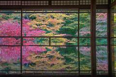 Ruriko-in Temple, Kyoto. Japan (FollowingNature (Yao Liu)) Tags: reflection kyoto fallcolors fallfoliage 京都 日本 秋葉 followingnature 瑠璃光院
