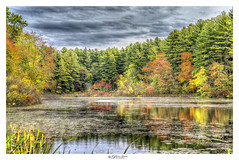 Pretty Autumn Pond (Pearce Levrais Photography) Tags: pond water lake reflection landscape autumn autumnleaves autumnal foilage forest tree thebestofhdr trees plant sky cloud sony a7r3 hdr ilce7rm3 outdoor outside beautiful nature
