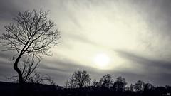 Fin de journée automnale (Un jour en France) Tags: automne soleil ciel arbre contrejour picardie canonef1635mmf28liiusm cielpaysage canoneos6dmarkii leshautsdefrance landscape oise groupenuagesetciel