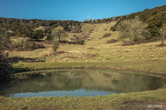 Dew Pond below the Yew-clad coombe of Kingley Vale, in the South Downs, north of Chichester. (Scotland by NJC.) Tags: hill تَلّ colina 小山 brdo kopec bakke forhøjning landskabet heuvel mäki colline hügel λόφοσ collina 丘 언덕 ås wzgórze deal холм backe เขาเตี้ยๆ tepe coğrafya пагорб đồi ponds pool lagoon lago 湖 jezero sø meer järvi lac see λίμνη 호수 innsjø jezioro озеро trees foliage vegetation arboretum شَجَرَة árvore 树 drvo strom træ 나무 tre drzewo copac дерево kingleyvale southdowns westsussex england