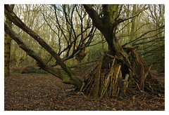 Den (Tom Clapping) Tags: eppingforest essex woods forest den
