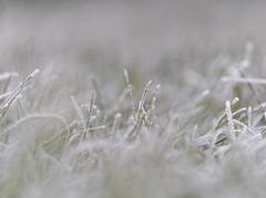 Frosty grass. (S.K.1963) Tags: frost grass close up macro bokeh sony a7iii sigma 70mm art 28