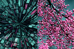MMM Favorite Colors (Carrie McGann) Tags: hmmm mosaicmontagemonday mosaic montage favoritecolors teal pink nikon nikond850 interesting