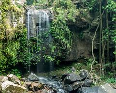 Curtis Falls (agasfer) Tags: 2019 australia mttamborine pentax k3 sigma1020 waterfalls