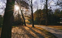 Spaziergang im Schlossgarten (KaAuenwasser) Tags: spaziergang weg wege baum bäume herbst kahl blatt blätter laub wiese schlossgarten karlsruhe herbstlich laufen sonne sonnenstern strahlen schein sonnenschein licht schatten jahreszeit stimmung ruhe november dezember pflanzen zeit morgen wetter landschaft park garten anlage ort stelle platz gebiet