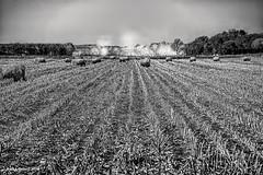 Harvest Dust (jackalope22) Tags: bw mono texture lines dust harvest hay bales