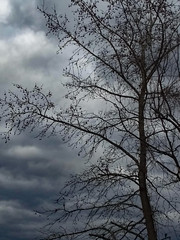 Clouds And Tree.