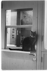 would you open the door now, please? (sebastel23) Tags: rolleiretro80s exposedlikeiso64 rodinal150 13min