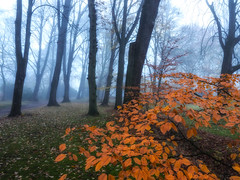 The last colors (Zoom58.9) Tags: forest trees leaves branches fog nature outside wald bäume blätter äste zweige nebel natur draussen europe europa germany deutschland bremerhaven sony sonydscrx10m4