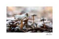 Marvels (g.femenias) Tags: mushrooms acorn soil nature naturallight macrophotography fontsufanes campanet mallorca
