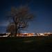 Washington Monument Mulberry Tree