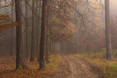 Walking in the mist (Petr Sýkora) Tags: les mlha podzim forest nature trees fog mist autumn atmosphere czech