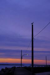 orange and purple (makriver) Tags: vertical magichour silhouette shadow light japan scenery nature fujixsystem xf16mmf14 xt3 fujifilm sky cloud sunset sea embankment seagull bird purple orange