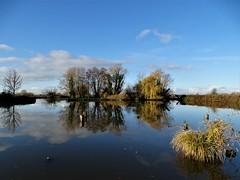 Réserve naturelle du romelaëre en automne.Marais audomarois. (daviddelattre) Tags: nature paysage arbre eau nuage ciel bleu photo reflet