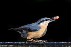 Nuthatch (Linda Martin Photography) Tags: bird hampshire sittaeuropaea nuthatch wildlife eyeworthpond newforest nature naturethroughthelens coth coth5 ngc
