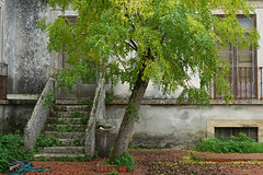 Abandonnée (hans pohl) Tags: portugal setubal azeitao architecture escaliers stairways fenêtres windows arbres trees nature