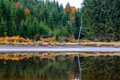 Dead tree (stefan.bayer) Tags: sb spiegelung mirror reflection tree baum wald see forest bäume trees fichte