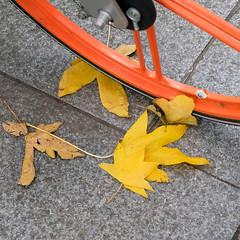 Autumn on the street (Allan Rostron) Tags: