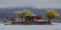 Lake Kawaguchiko, Japan. (mjmcleanphotography) Tags: japan lakekawaguchiko kawaguchiko lake island autumn autumnleaves autumncolours voigtlander trees