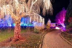 3-watermark (Brian M Hale) Tags: tower hill botanic botanical garden boylston ma mass massachusetts newengland usa night lights christmas holiday outside outdoors brian hale brianhalephoto