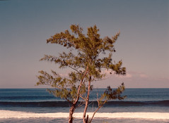 Lonely tree. (miroir.photographie) Tags: 974 pentax ektar 645 kodak mediumformat istillshootfilm filmisnodead argentique analog france la reunion island