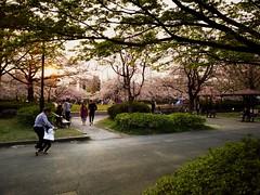 Sarue Onshi Park, Tokyo, Japan. (Supersoignant) Tags: japan japon tokyo park sun sakura green parc family famille familie garden garten jardin public