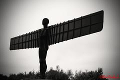 Angel of the North (2040) (red.richard) Tags: angel north bw figure newcastle england uk nikon d800 cof089 cof089dero cof089mari cof089dmnq