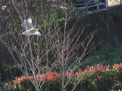 IMG_4610 (jesust793) Tags: gaviotas seagulls pájaros birds naturaleza nature
